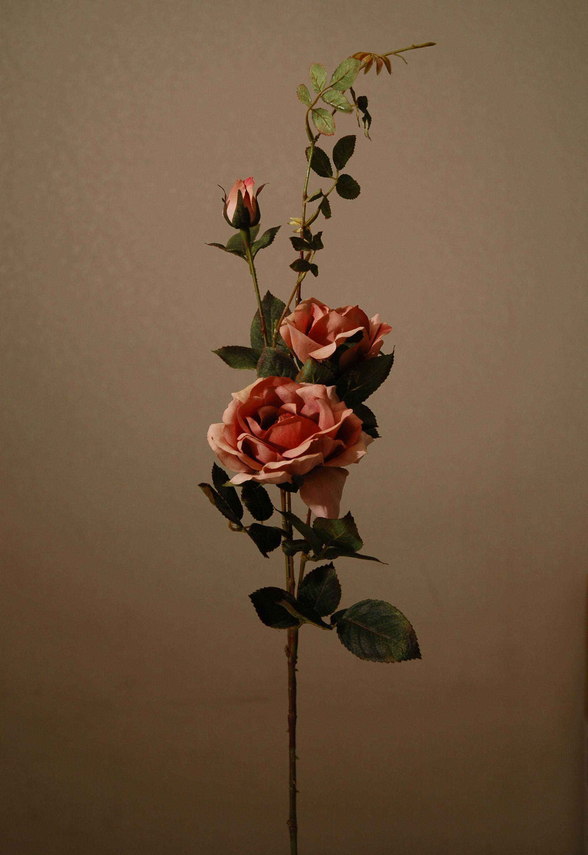 rose 01 2005