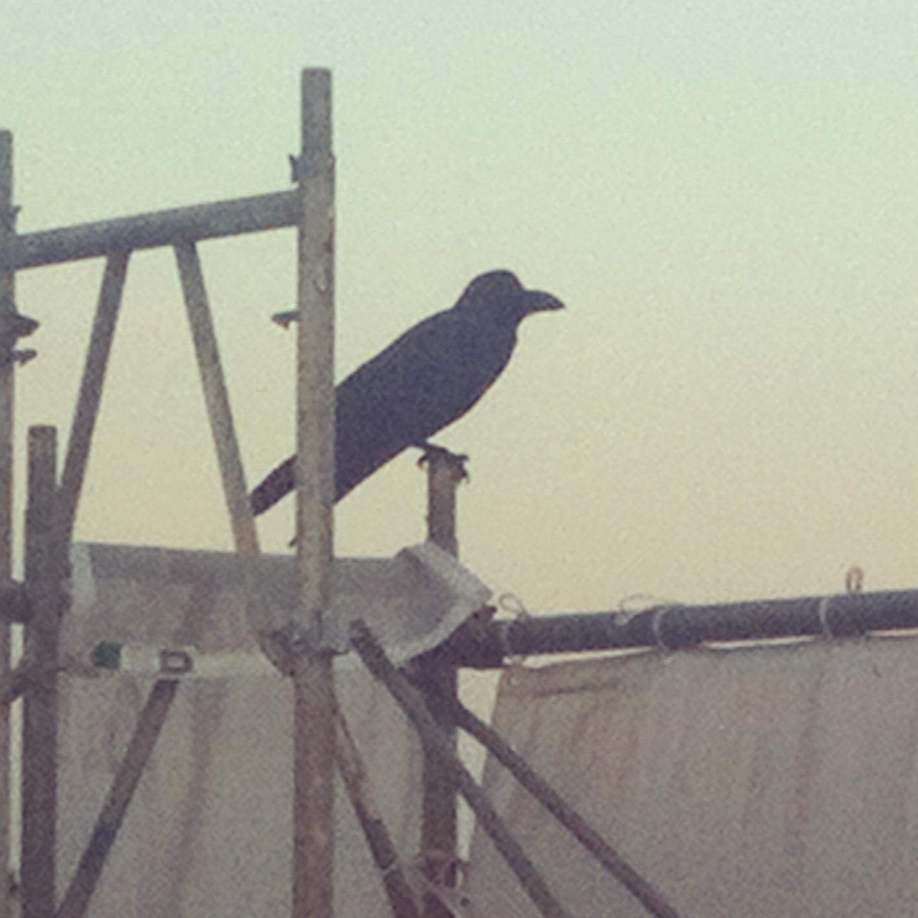 crow 2012