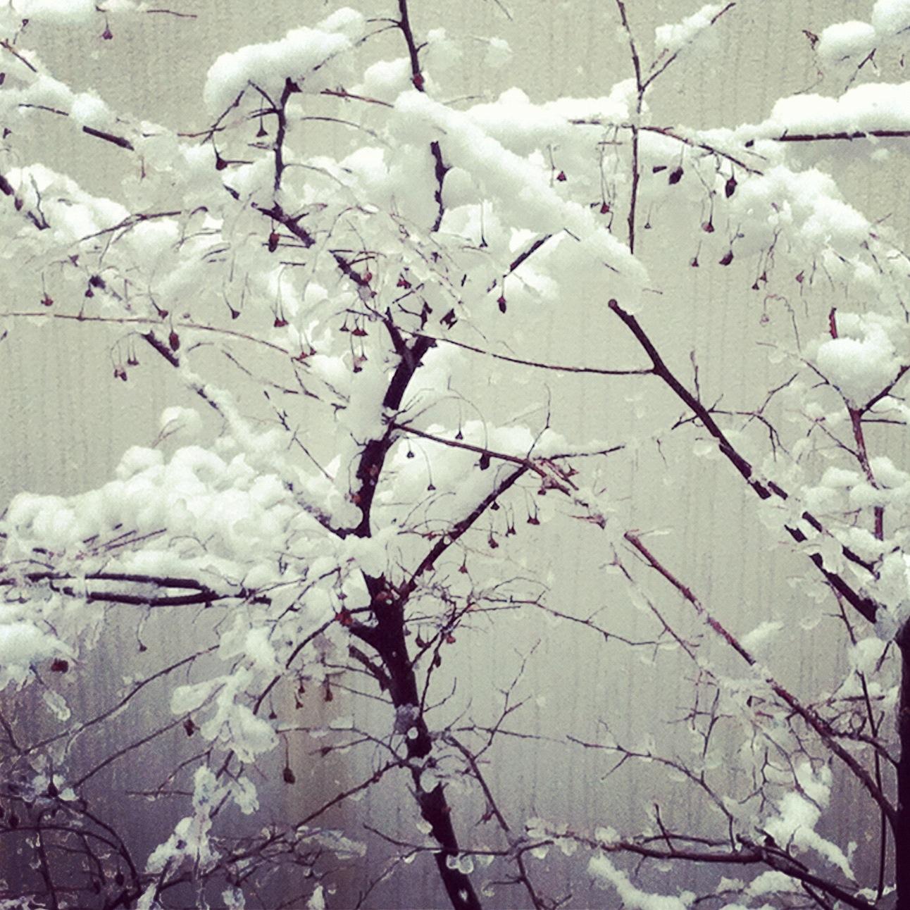 SNOW 01 2012