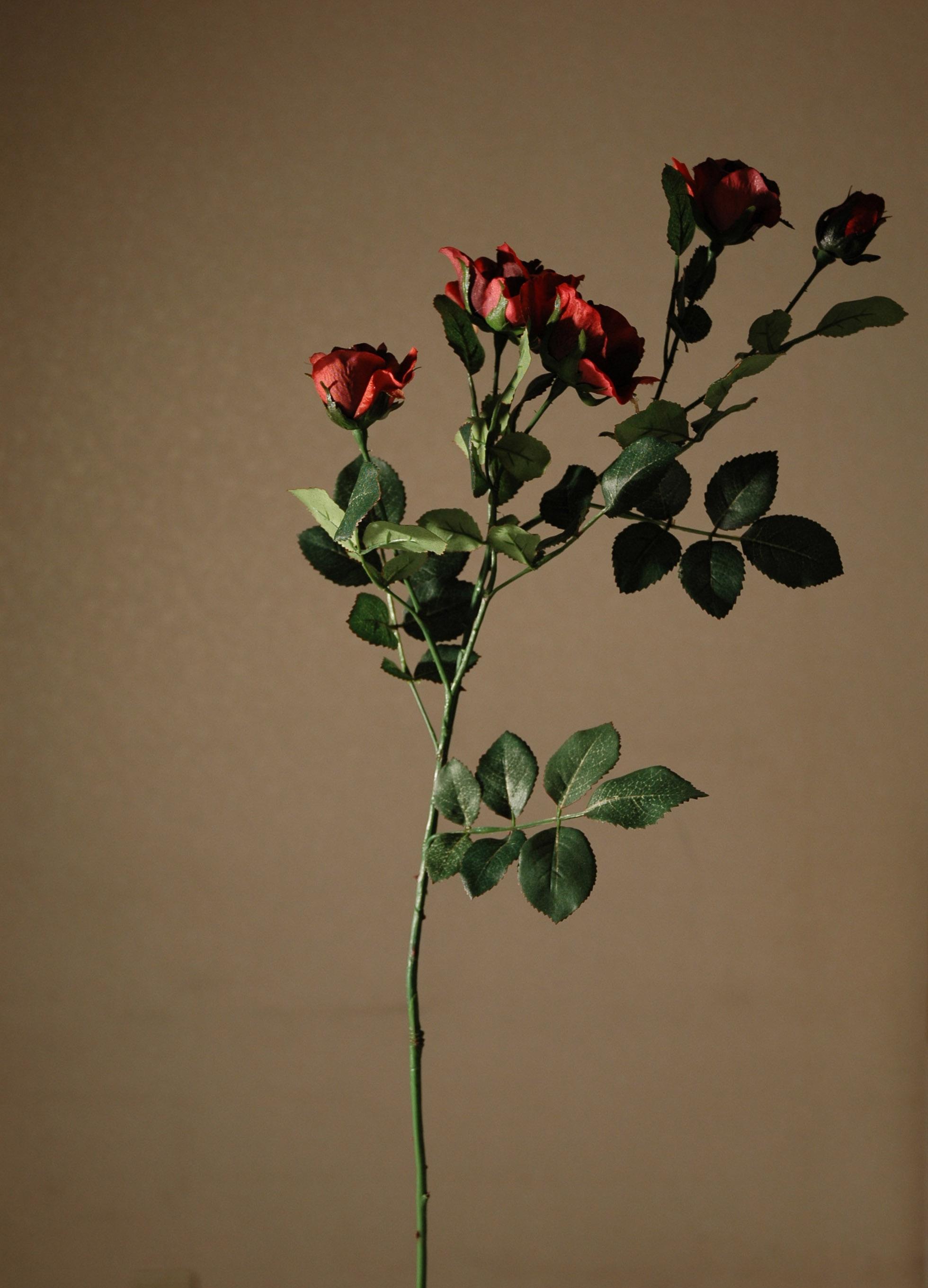 rose 02 2005